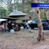 Howling moon trailer tent 11